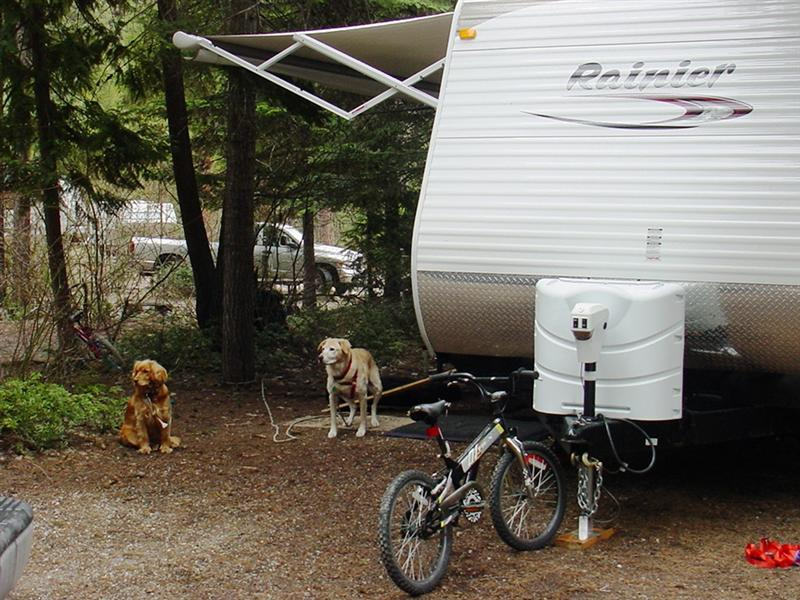 Fathom and Saddie enjoying camping