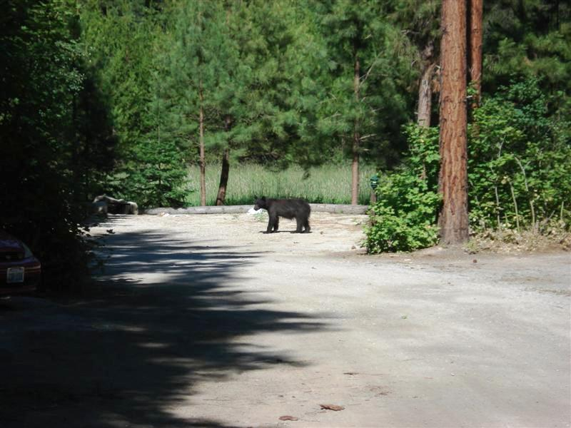 Leavenworth Bear
