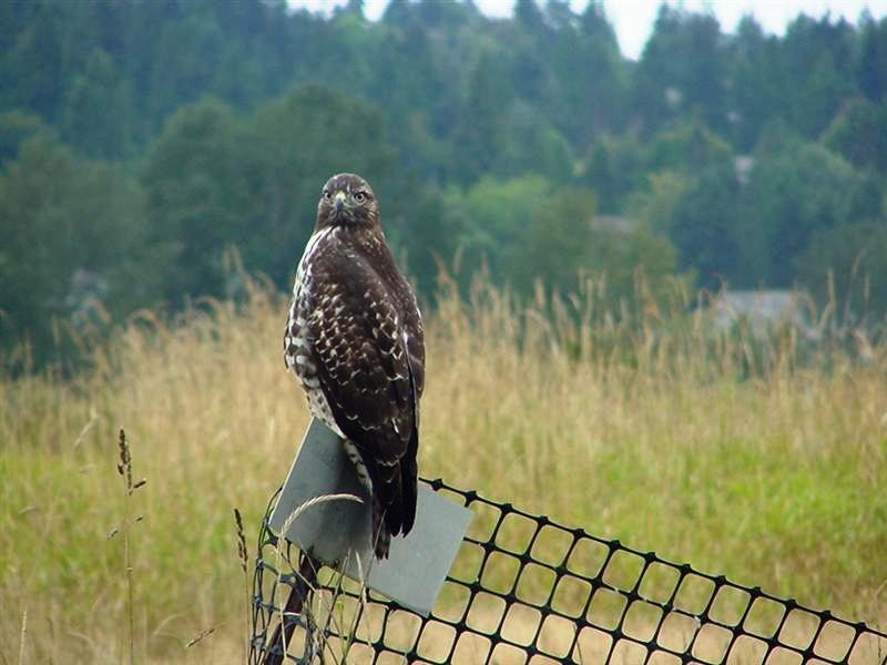 very close to the hawk