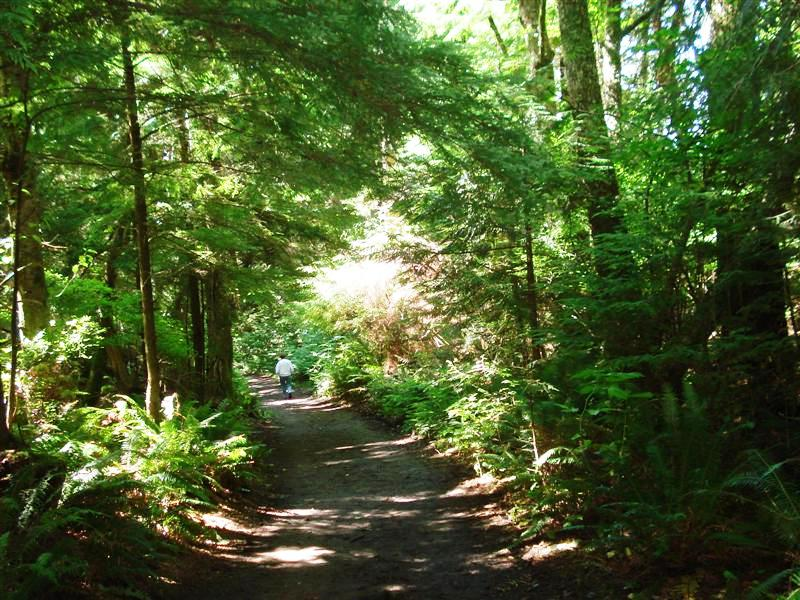 Trail Leading to the Point on Cape Flattery