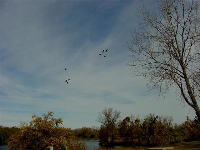 Flock of geese over Hannibal
