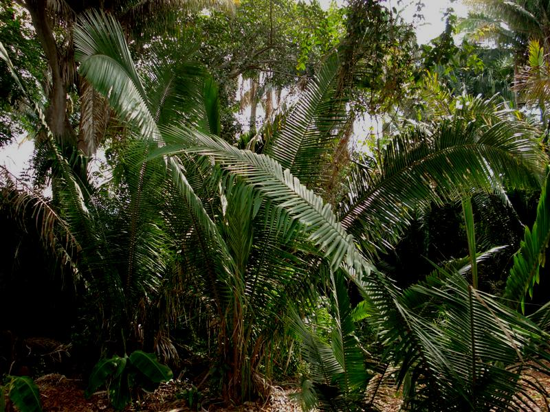 Back Yard Jungle