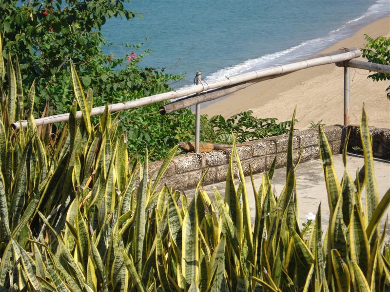 RV Park Iguana on Ledge