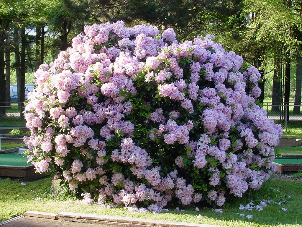 Beautiful Flowering Bush